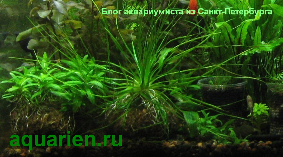 aquarien.ru-blog-akvariumista
